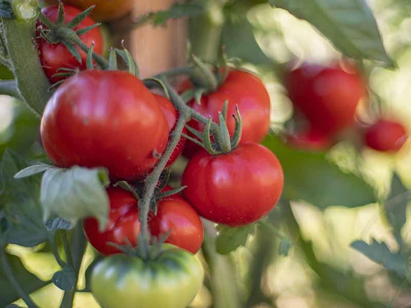 Organisez vos séminaires au Jardin des 4 Saisons